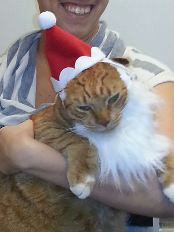Cat with Santa hat and beard